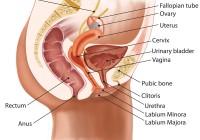 Haemorrhoiden-Ursachen-und-Behandlung
