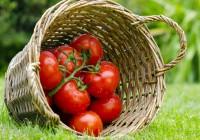 Sind-Bio-Nahrungsmittel-gesuender